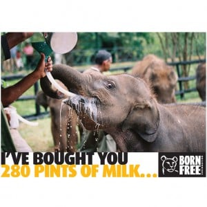 Gifts for wildlife from Born Free - Milk for a baby elephant