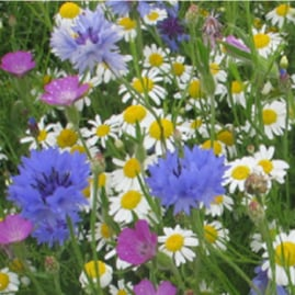 Adopt a Square Metre of B-Lines and help Buglife re-create wildflower meadow for pollinators