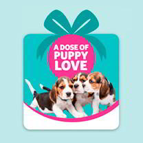 Virtual gifts to help the PDSA care for pets
