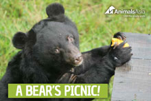 Send a gift to a rescued bear