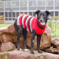 Many Tears Animal Rescue need your help and knitting