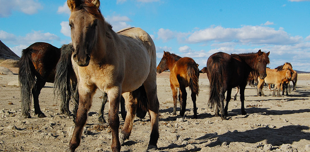 You can help these horses from the comfort of your home!