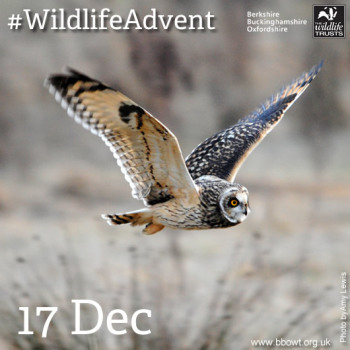 Watch out for the Advent Calendar online from the Berkshire, Buckinghamshire and Oxfordshire Wildlife Trust