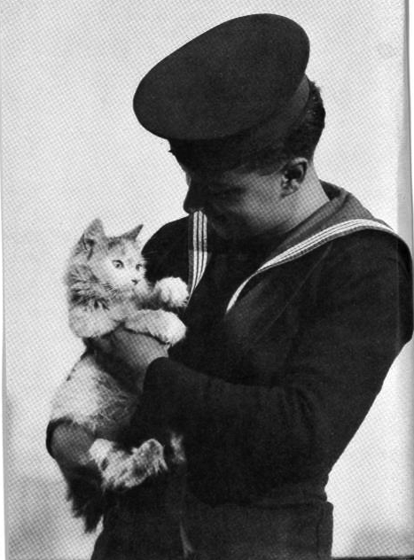 Cats too, contributed to the war effort