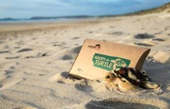 Adopt a turtle from the Marine Conservation Society