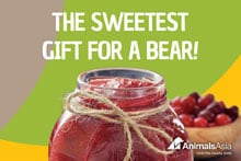 Give a bear the gift of a jar of strawberry jam