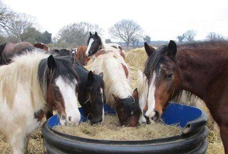 Give a bale of hay for £5 to the animals at the Hillside Animal Sanctuary