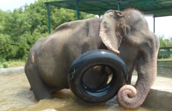 Floating Tube for Raju