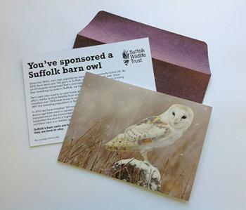 Sponsor a Barn Owl