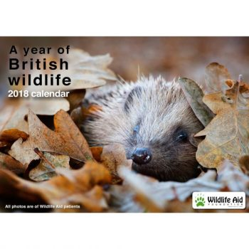 A Year of British Wildlife 2018 Calendar