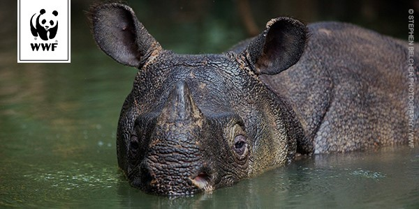 Click here to help the Javan rhino