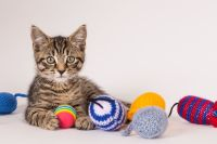 Join the Battersea Knitting Kittens Club