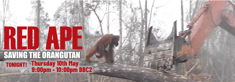 Red Ape: Saving the Orangutan TONIGHT 9:00pm - 10:00pm on BBC2