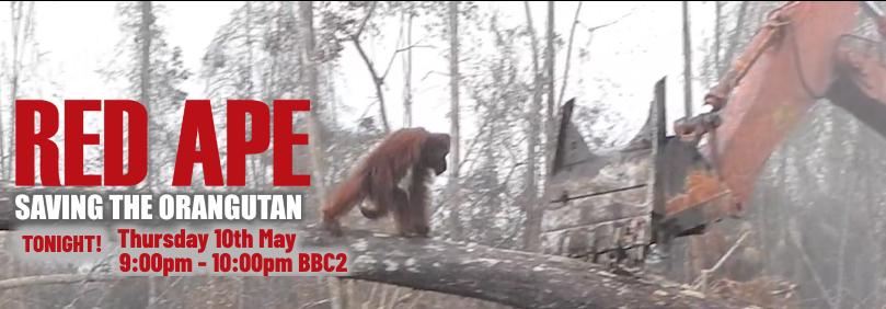 Red Ape: Saving the Orangutan on BBC2