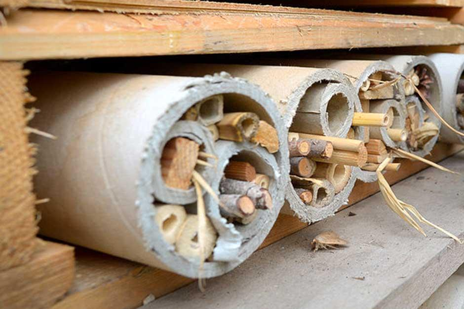 Make a Bee hotel to encourage bees