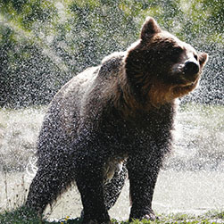 Give a bear a Spa Day