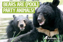 Send bears a Pool Party!