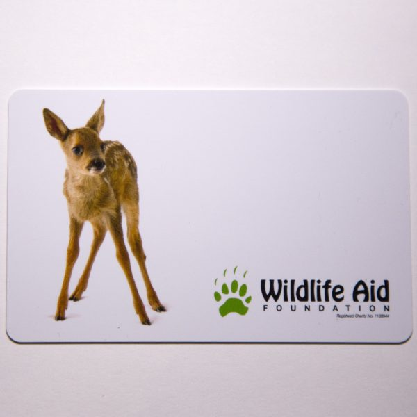 Help give a sick or injured fawn the treatment it needs
