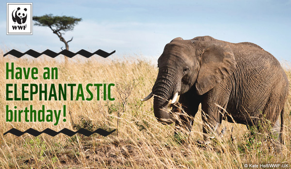 View the range of e-cards from the WWF