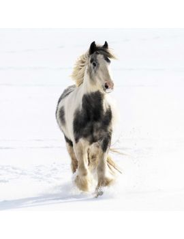 neigh gallop away to the world horse welfare shop - Animal Charity Christmas Cards