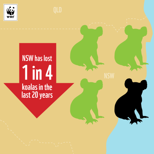 Sign WWF's petition to help koalas