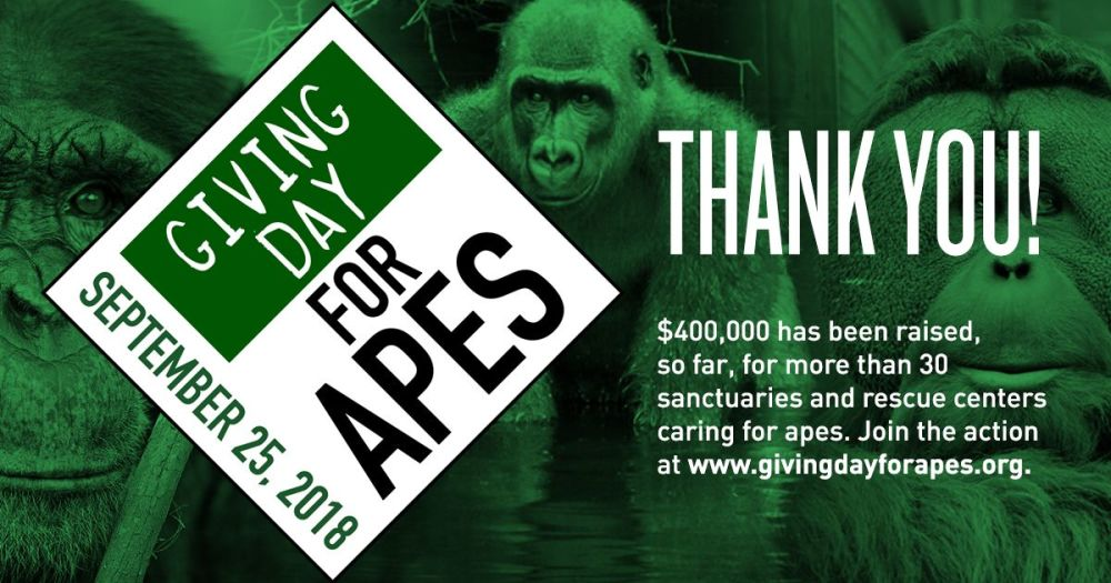 Thank you from everyone at Giving Day for Apes