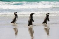 Waddle to find out about penguin conservation charities