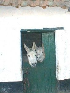 Adopt a Donkey from Neddi