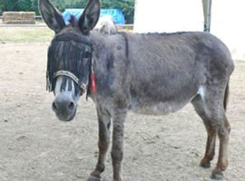 Adopt a Donkey from the Corfu Donkey Rescue
