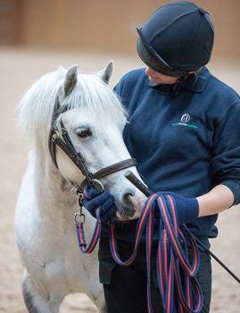 Adopt a horse from World Horse Welfare