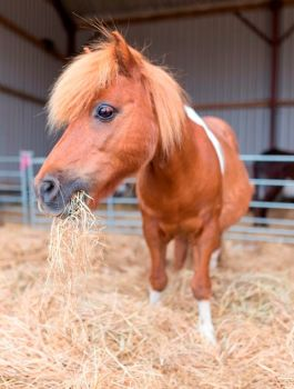 Adopt Bingo from HorseWorld