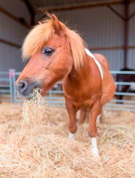 Adopt Bingo from HorseWorld
