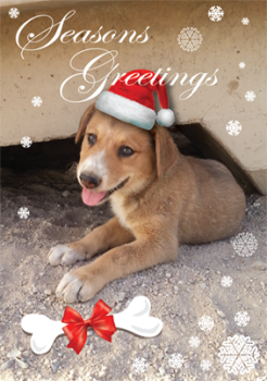 Buy Christmas Cards and help War Paws