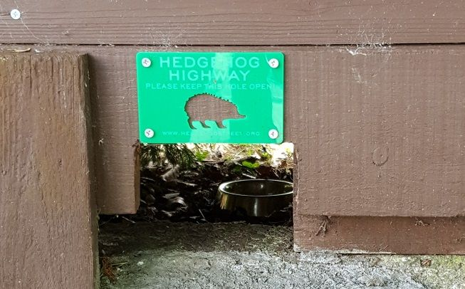 Give hedgehogs a hole to get through in your garden and help create a Hedgehog Highway
