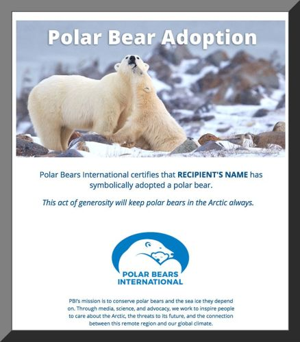Adopt a polar bear for $25.00 with an Eco-Adoption