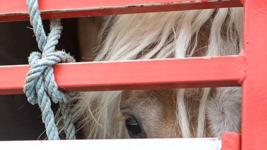 Please help horses by signing this petition