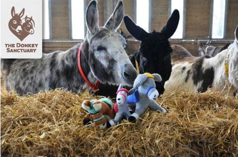 Visit the Donkey Sanctuary's website