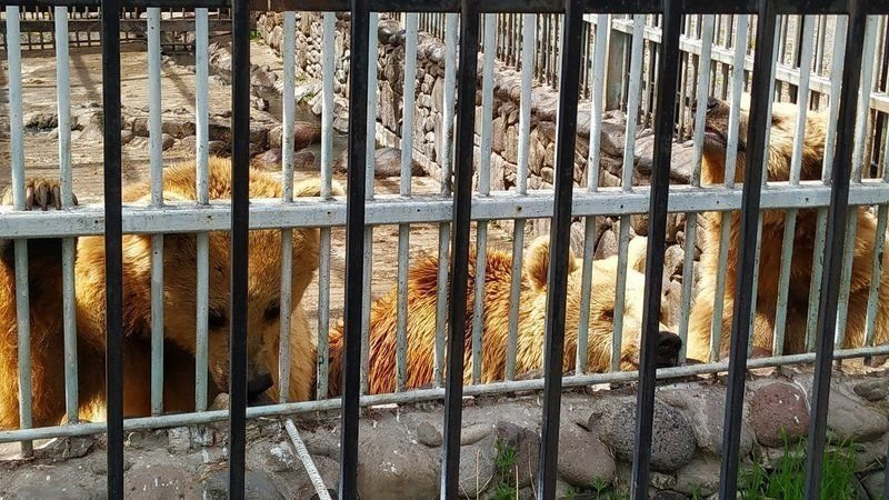 Help save these bears from this cage in Armenia - please sign this petition