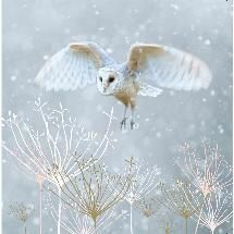 The RSPB has some wonderful Christmas cards