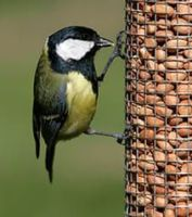 Fly away to visit the RSPB's website