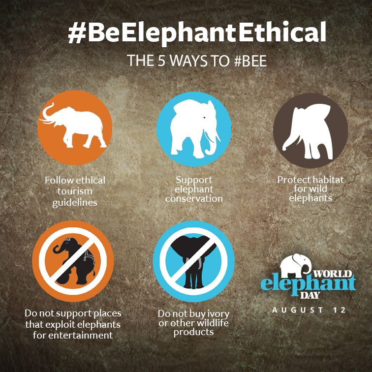 #BeElephantEthical