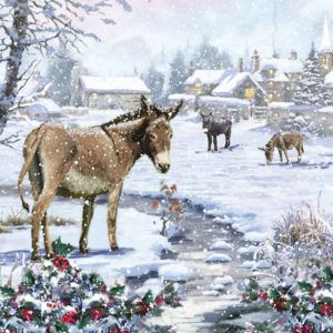 Visit SPANA to see their range of Christmas cards