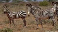 Find out about International Zebra Day