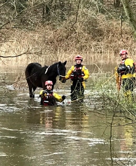 The RSPCA has been very busy helping animals caught by floods