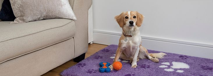 Check out the RSPCA's advice on self-isolation and pet care