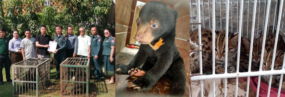 Rescued!  And off to a new life with Free the Bears