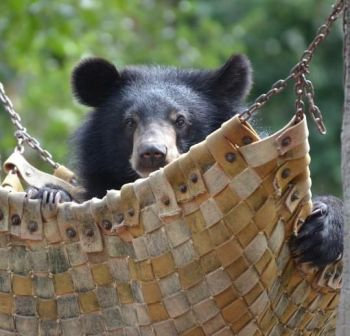 Give a bear a hammock