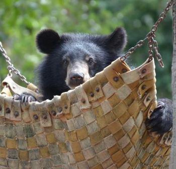 Give a bear a hammock