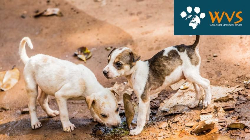 FInd out how you can help WVS help animals worldwide