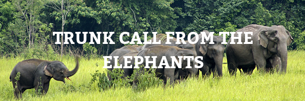 Here's a trunk call from the elephants